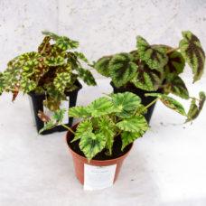Комнатные растения, декоративные растения, садовый центр Орёл