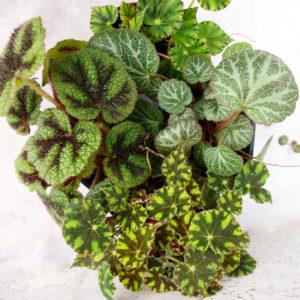 комнатные растения, садовый магазин, садовый центр, комнатные цветы